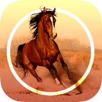 Horse_iOS