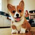 Oh My Corgi!'s Twitter Profile Picture