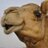 TheComicCamel profile