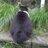 The profile image of hatimofusuki