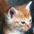 The profile image of hikita_bungorou