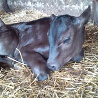 WithCattle   Social Profile