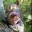 Treestand_tweet profile