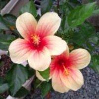 kaori | Social Profile