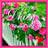 @dhien_ayu