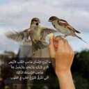ريانة العود (@0000_sar) Twitter
