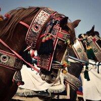 Abdulaziz عبدالعزيز | Social Profile