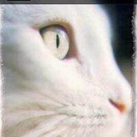 Loulou   Social Profile
