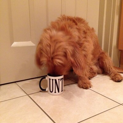 Barnaby the Dog | Social Profile