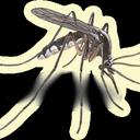 CCMosquito