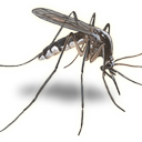 CC Mosquito & Vector (@CCMosquito) Twitter