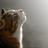 Venetian White Cat