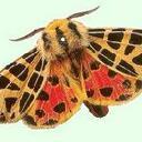 butterfly (@00butterfly0) Twitter