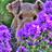 paula coyle