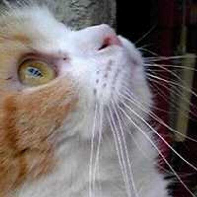 猫乃 しゅうむ | Social Profile