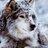 @Winter_Wolf_MI