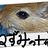 unguiculatus