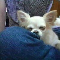サービスカード高柳 (ちんあなご) | Social Profile