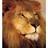 Lion Rulz