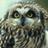 The profile image of markov_owl