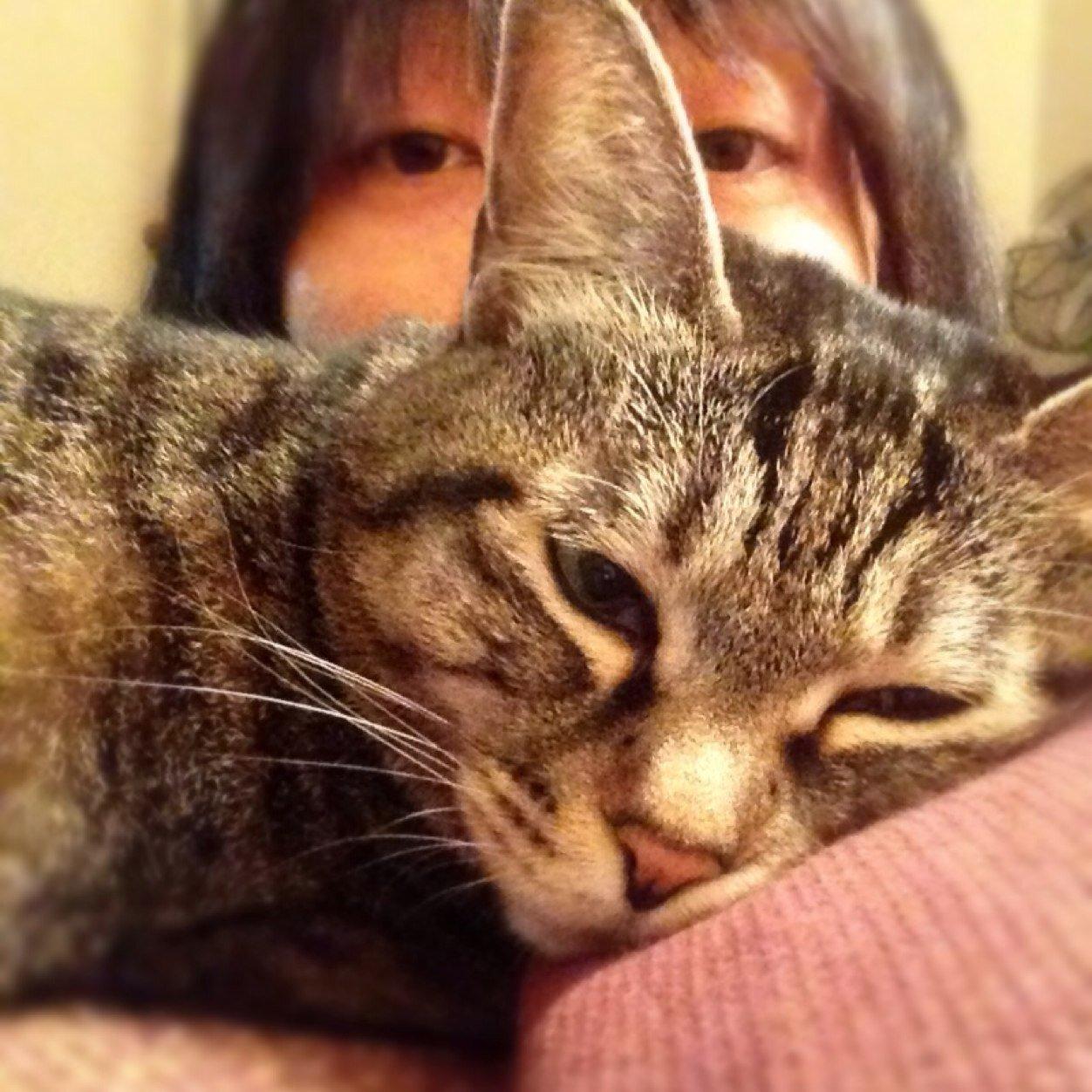 鈴木やすし Social Profile