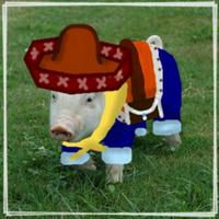 MEG.pig (booring) | Social Profile