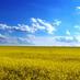 Free Ukraine 🇺🇦's Twitter Profile Picture