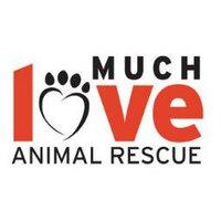 Much Love | Social Profile