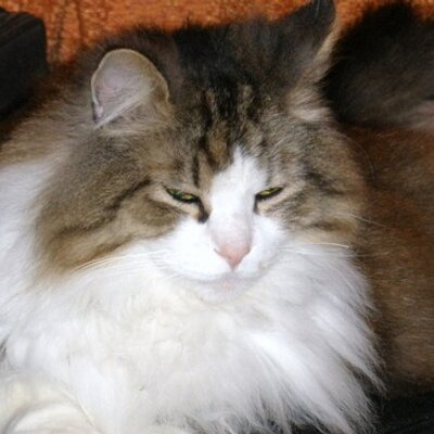Mc Kitty   Social Profile