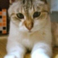 KUNI-NET元シソペ | Social Profile