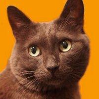 Kontan_Bigcat | Social Profile