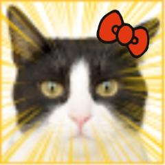 maria/安倍 茉里/sabrina Social Profile