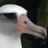 AlbatrossCam