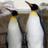choporya choporya のプロフィール画像