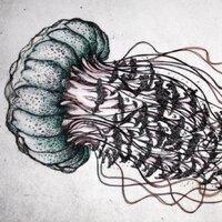 Noodlefish | Social Profile