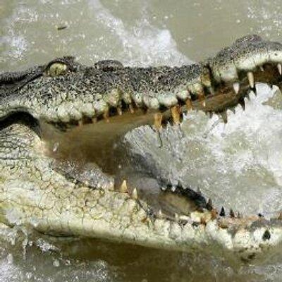Bristol Croc | Social Profile