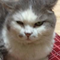 ポンプマン@鉄血の一匹狼な野良猫㌠ | Social Profile