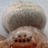 BrothLGregarius profile