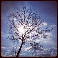 bRyCe A cReAtIvE | Social Profile