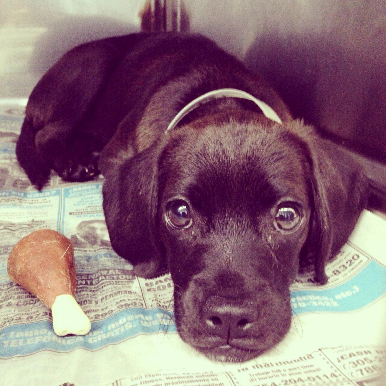 Urgent Dogs of Miami Social Profile