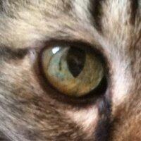 たんす@たにし | Social Profile
