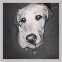 Dogballs    Social Profile