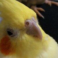意識低い鳥 | Social Profile