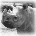 Rhino pentarou