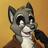 tilton_raccoon profile