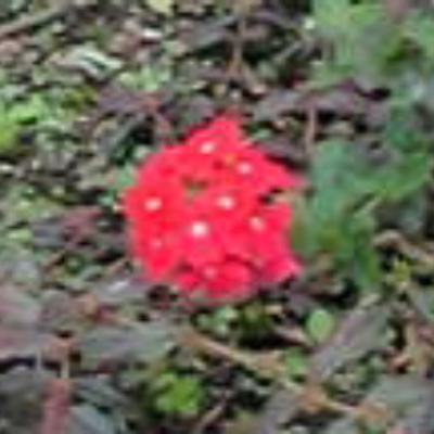 Flora | Social Profile