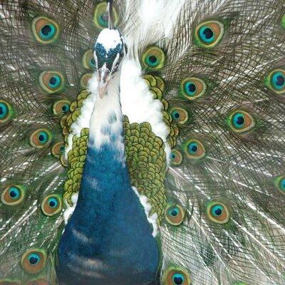 quantum entanglement | Social Profile