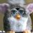 The profile image of natukashi_