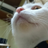 ke2_cat