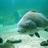 salth20fishing profile